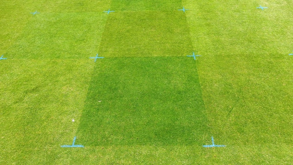 demo patches of turf showing colour difference